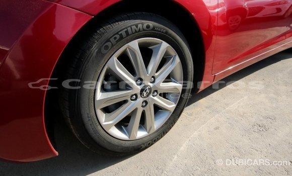 Buy Import Hyundai Elantra Red Car in Import - Dubai in Belize